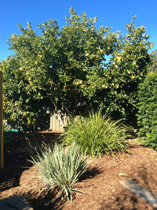 Little Miracles Community Kindergarten Toowoomba Fruit Tree